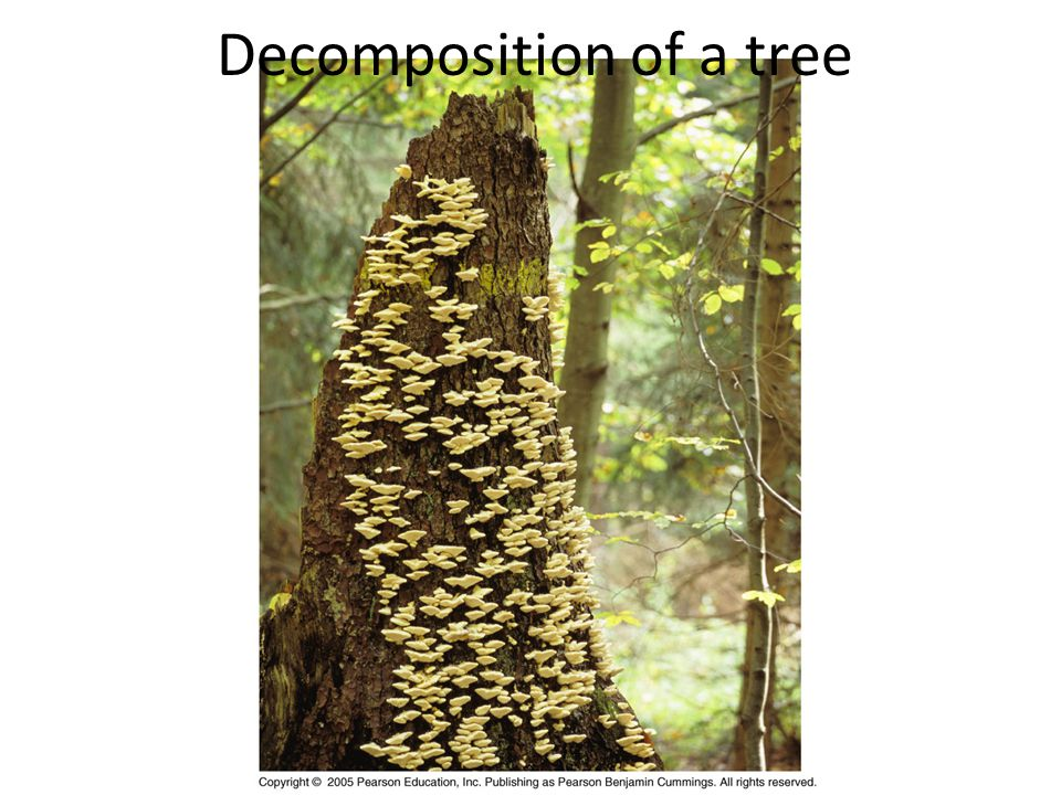 Decomposition of a tree
