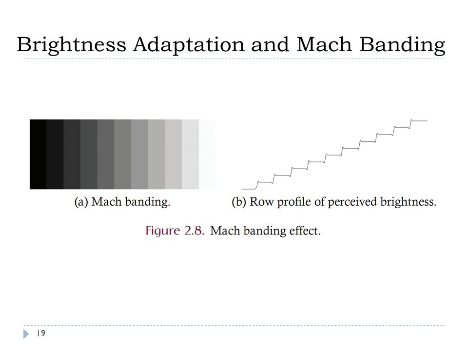 Brightness Adaptation and Mach Banding 19