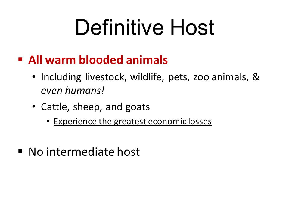 Definitive Host  All warm blooded animals Including livestock, wildlife, pets, zoo animals, & even humans.