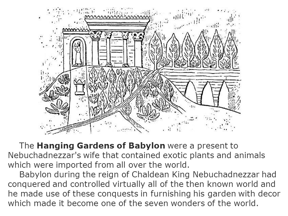 The Hanging Gardens of Babylon were a present to Nebuchadnezzar s wife that contained exotic plants and animals which were imported from all over the world.
