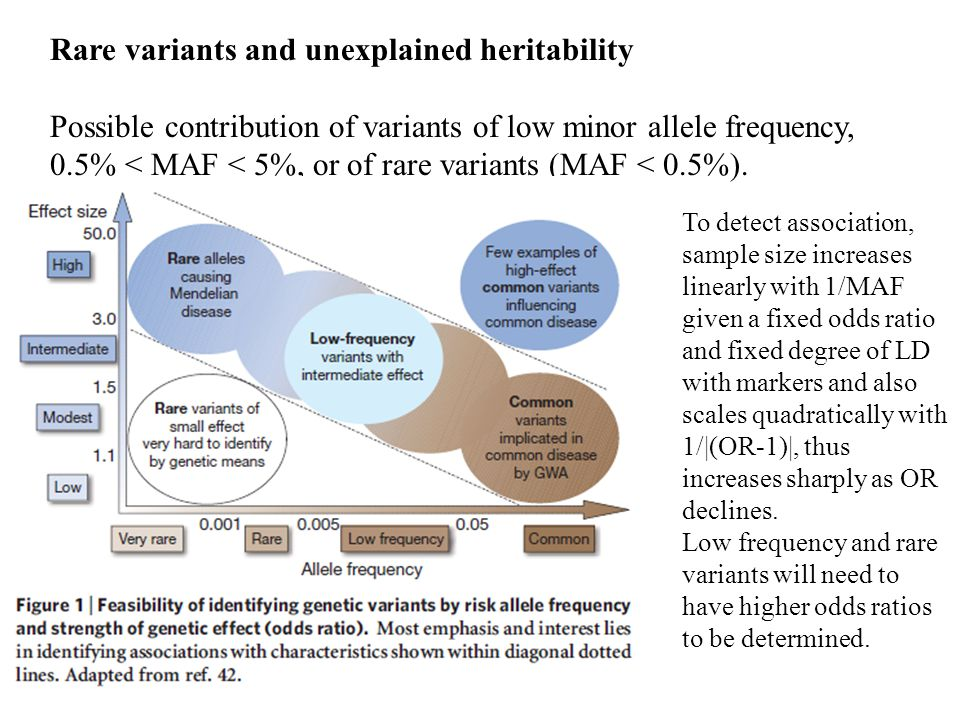 Rare variants and unexplained heritability Possible contribution of variants of low minor allele frequency, 0.5% < MAF < 5%, or of rare variants (MAF < 0.5%).