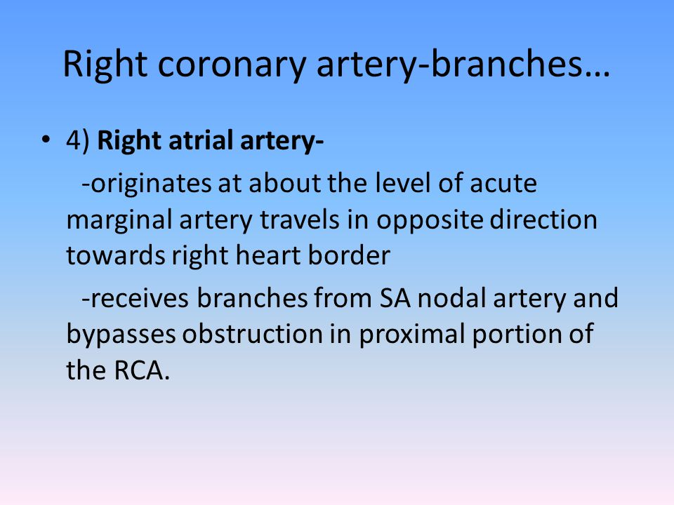 Right coronary artery-branches… 4) Right atrial artery- -originates at about the level of acute marginal artery travels in opposite direction towards