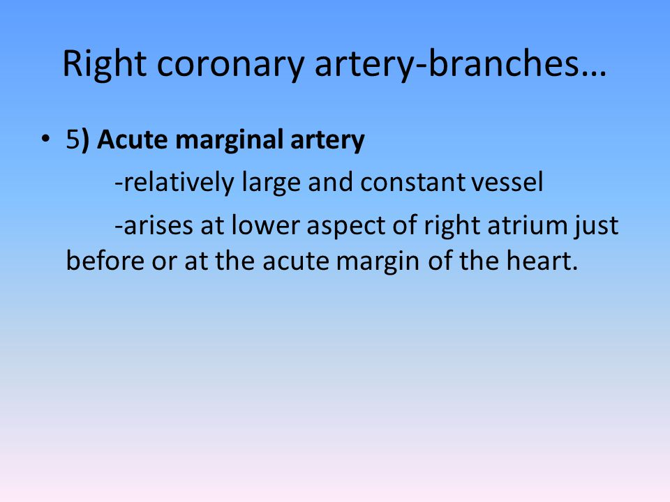Right coronary artery-branches… 5) Acute marginal artery -relatively large and constant vessel -arises at lower aspect of right atrium just before or