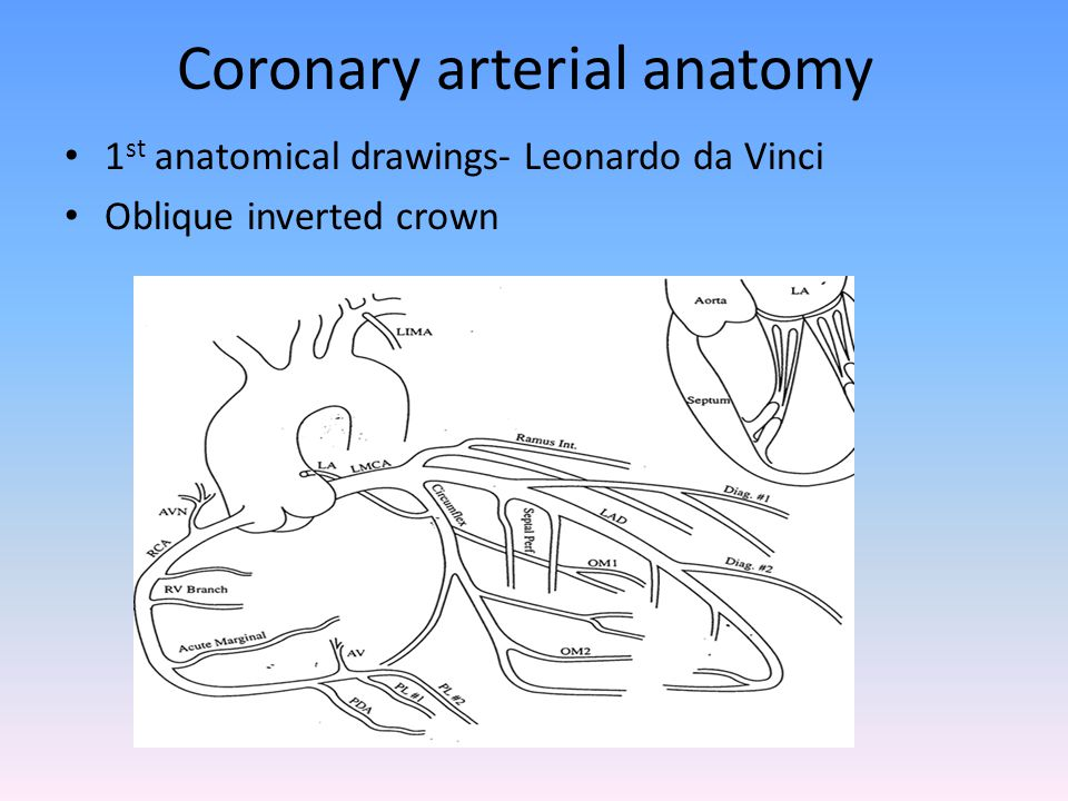 AHA Definition of coronary tree segments Arterial tree is divided into 16 segments This system has been adopted for the syntax scoring.
