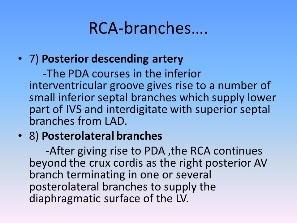 RCA-branches…. 7) Posterior descending artery -The PDA courses in the inferior interventricular groove gives rise to a number of small inferior septal