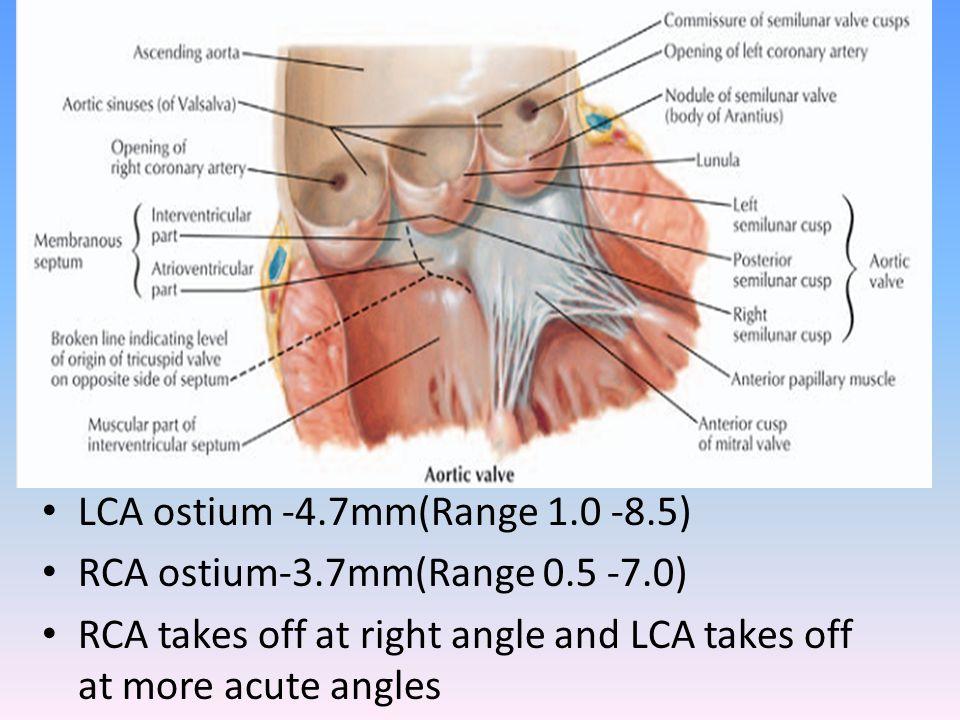 Left coronary artery LMCA -10-15mm(upto 30mm) length & 3-6mm(upto 10mm diameter),diameter is inversely proportional to its length, -Trifurcates in 1/3rd : Ramus intermedius/ median artery/straight LV artery/left diagonal artery.