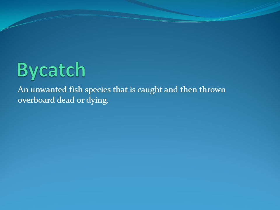 An unwanted fish species that is caught and then thrown overboard dead or dying.