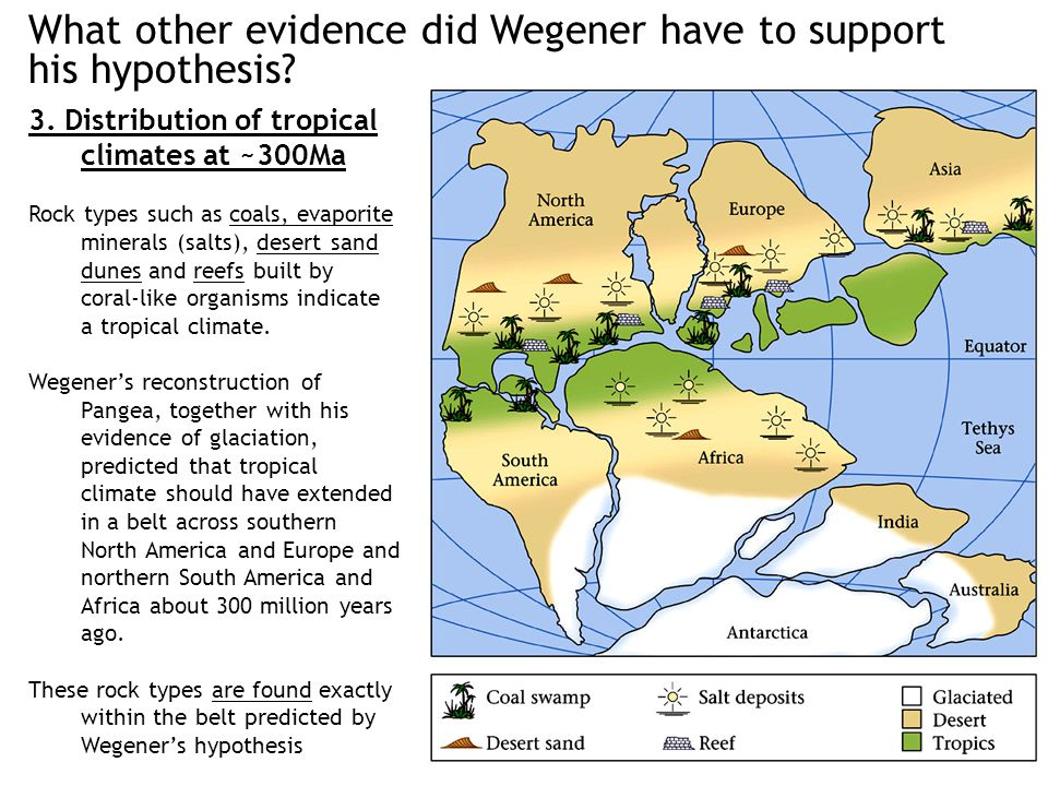 What other evidence did Wegener have to support his hypothesis? 3. Distribution of tropical climates at ~300Ma Rock types such as coals, evaporite min