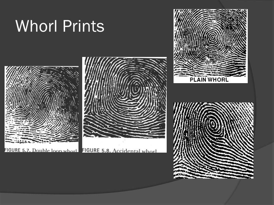 Whorl Prints
