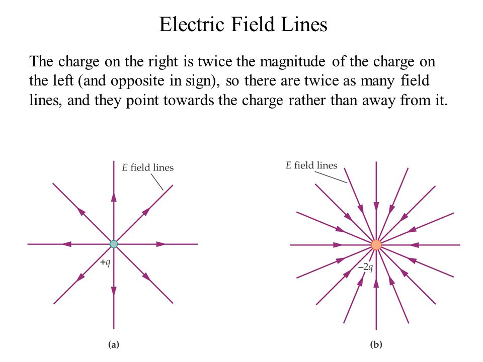 Electric Field Lines The charge on the right is twice the magnitude of the charge on the left (and opposite in sign), so there are twice as many field lines, and they point towards the charge rather than away from it.