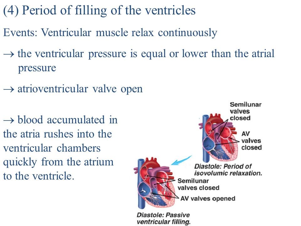 (3) Period of isometric (isovolumic) relaxation Events: ventricular muscle relax  the ventricular pressure fall  lower than the aortic pressure  ao