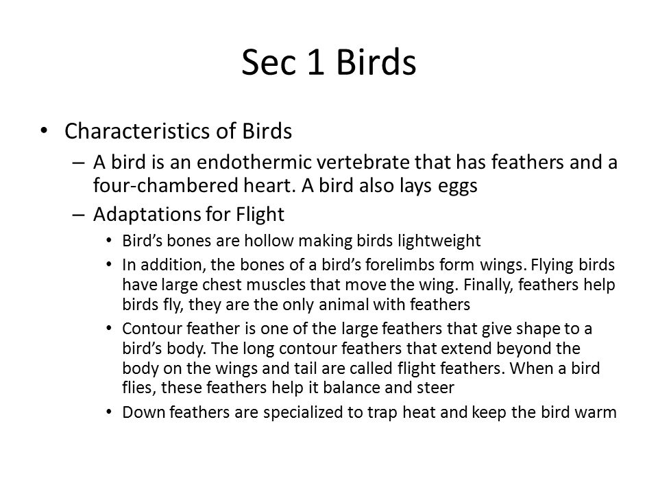Sec 1 Birds Characteristics of Birds – A bird is an endothermic vertebrate that has feathers and a four-chambered heart. A bird also lays eggs – Adapt