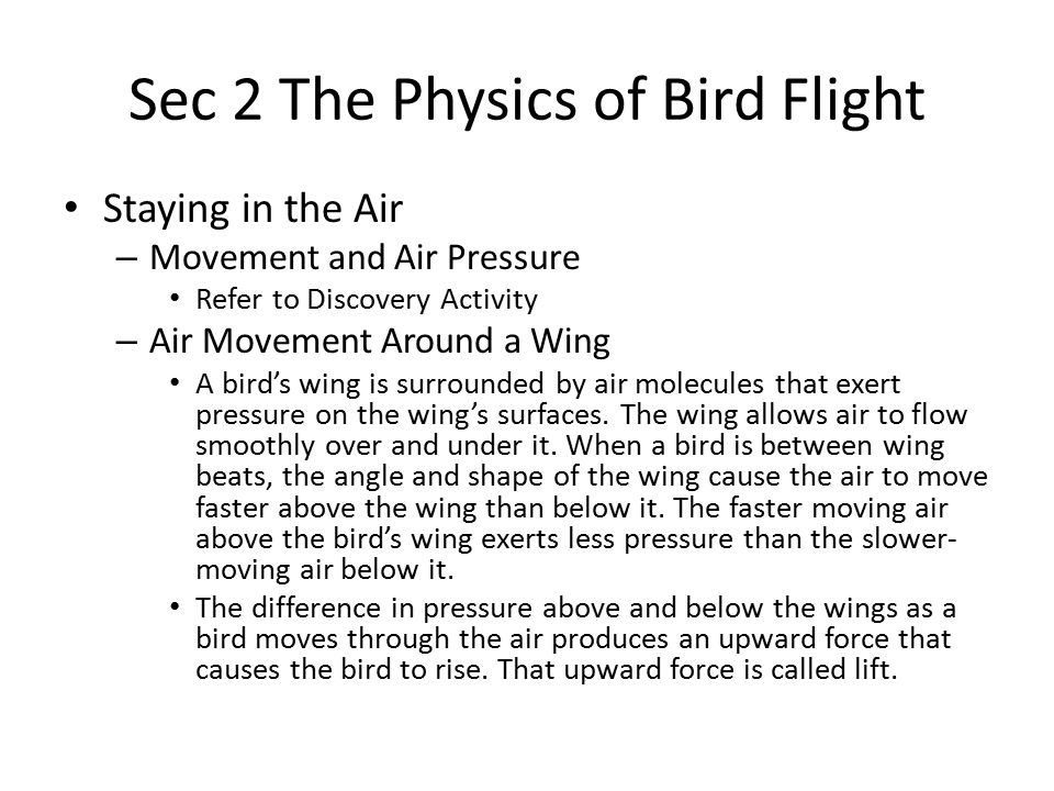 Sec 2 The Physics of Bird Flight Staying in the Air – Movement and Air Pressure Refer to Discovery Activity – Air Movement Around a Wing A bird's wing