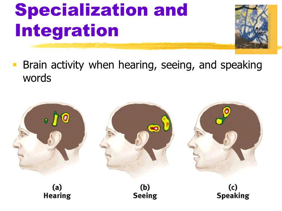  Brain activity when hearing, seeing, and speaking words