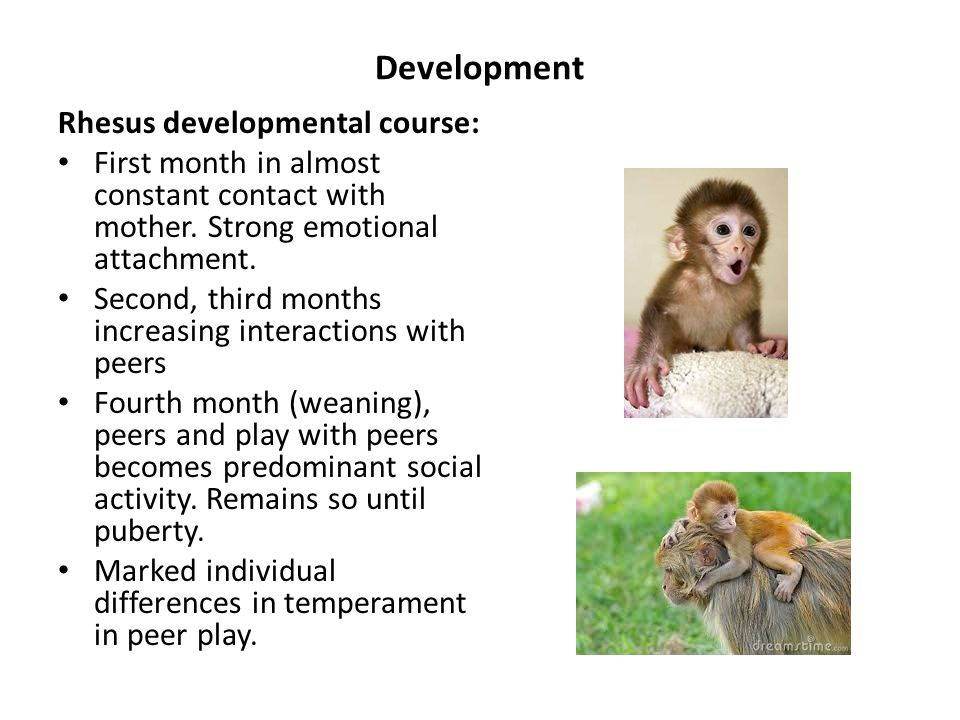 Development Rhesus developmental course: First month in almost constant contact with mother.