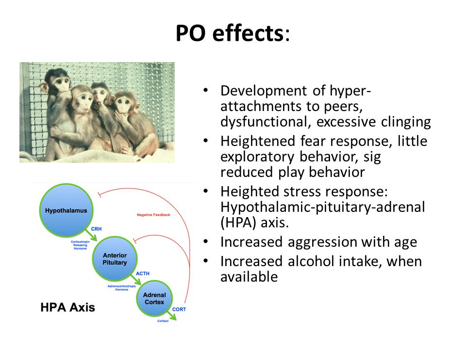 PO effects: Development of hyper- attachments to peers, dysfunctional, excessive clinging Heightened fear response, little exploratory behavior, sig reduced play behavior Heighted stress response: Hypothalamic-pituitary-adrenal (HPA) axis.