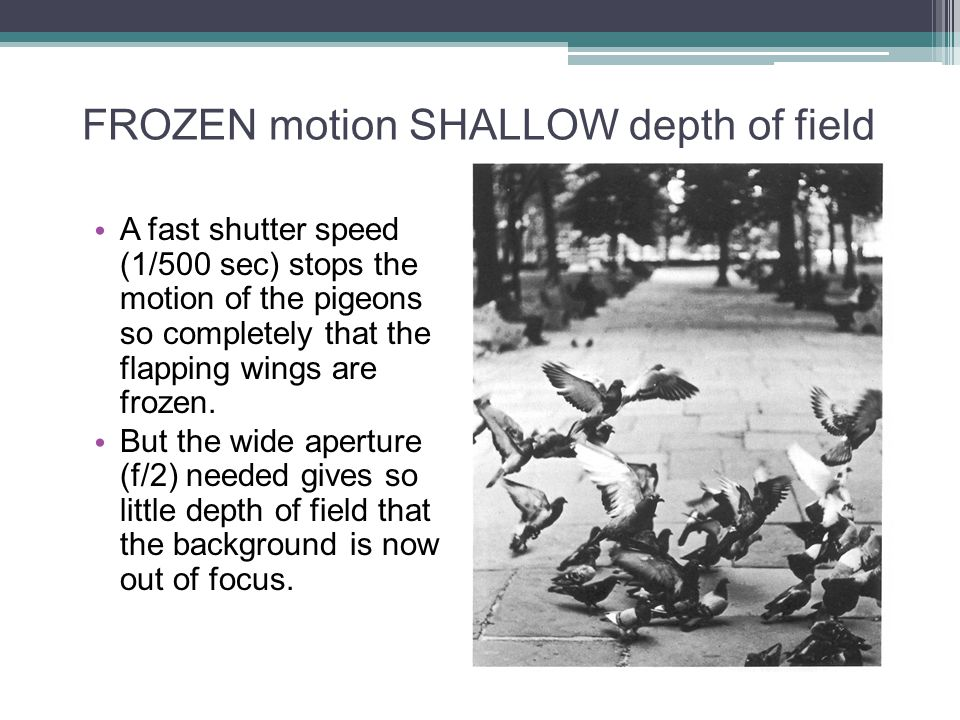 FROZEN motion SHALLOW depth of field A fast shutter speed (1/500 sec) stops the motion of the pigeons so completely that the flapping wings are frozen.