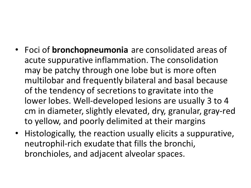 Foci of bronchopneumonia are consolidated areas of acute suppurative inflammation. The consolidation may be patchy through one lobe but is more often
