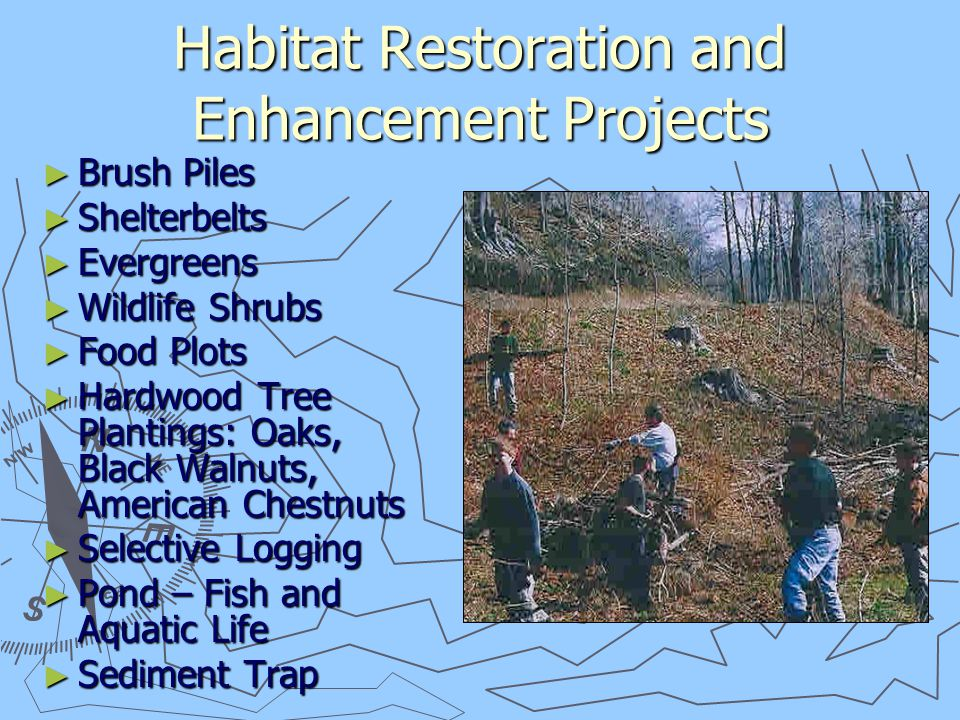 Habitat Restoration and Enhancement Projects ► Brush Piles ► Shelterbelts ► Evergreens ► Wildlife Shrubs ► Food Plots ► Hardwood Tree Plantings: Oaks, Black Walnuts, American Chestnuts ► Selective Logging ► Pond – Fish and Aquatic Life ► Sediment Trap