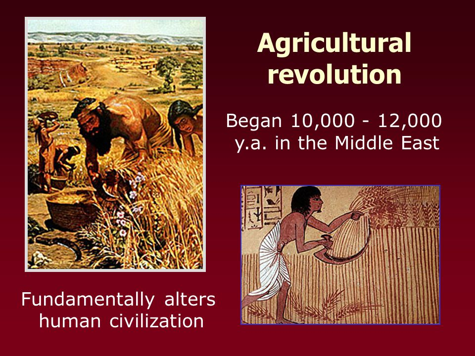 Began 10,000 - 12,000 y.a. in the Middle East Fundamentally alters human civilization Agricultural revolution
