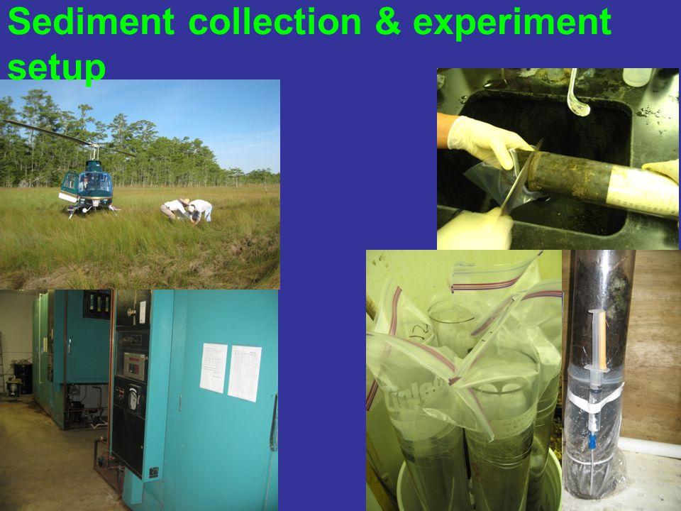 Sediment collection & experiment setup
