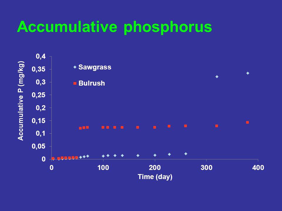 Accumulative phosphorus