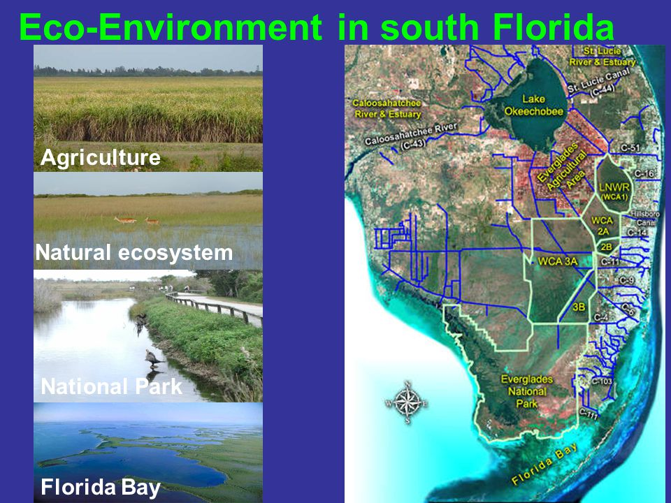 Florida Bay Natural ecosystem National Park Eco-Environment in south Florida Agriculture