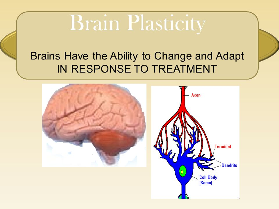 Brain Plasticity Brains Have the Ability to Change and Adapt IN RESPONSE TO TREATMENT