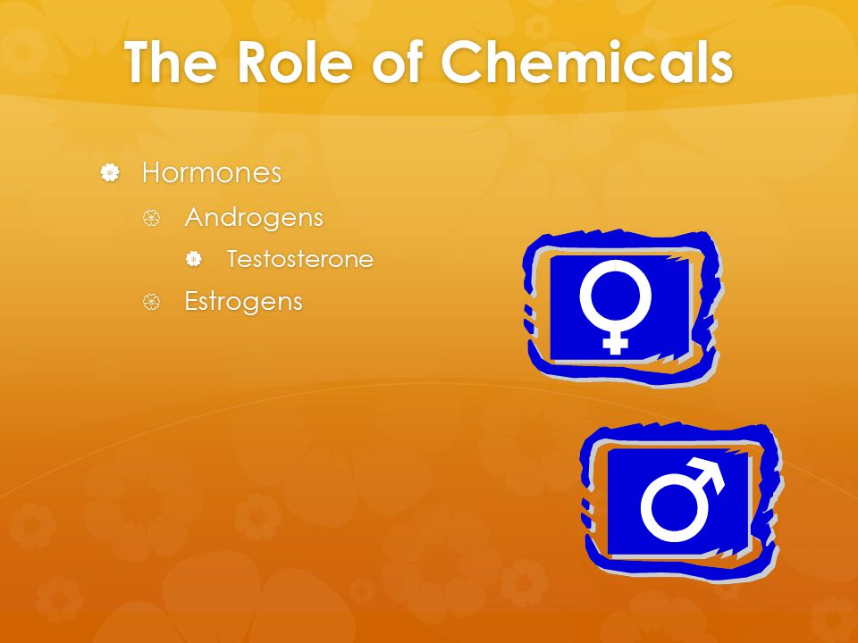 The Role of Chemicals  Hormones  Androgens  Testosterone  Estrogens