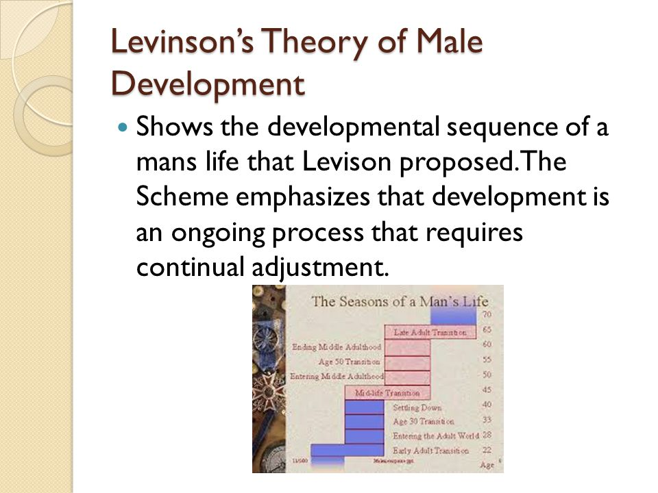 Levinson's Theory of Male Development Shows the developmental sequence of a mans life that Levison proposed.