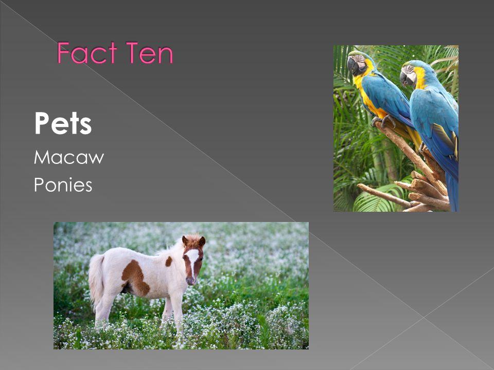 Pets Macaw Ponies