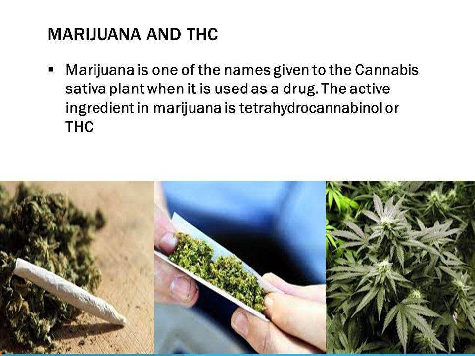 MARIJUANA AND THC  Marijuana is one of the names given to the Cannabis sativa plant when it is used as a drug.