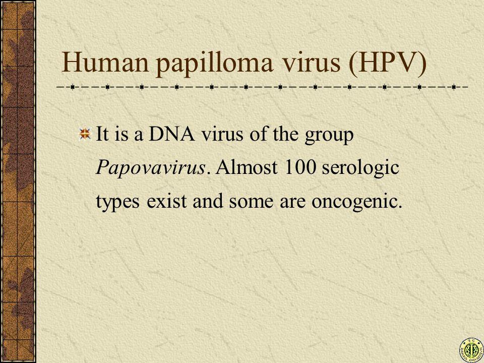 Human papilloma virus (HPV) It is a DNA virus of the group Papovavirus.