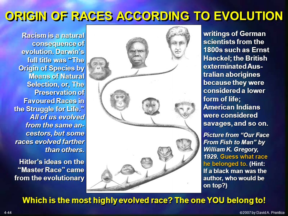  2007 by David A. Prentice ORIGIN OF RACES ACCORDING TO EVOLUTION writings of German scientists from the 1800s such as Ernst Haeckel; the British ex