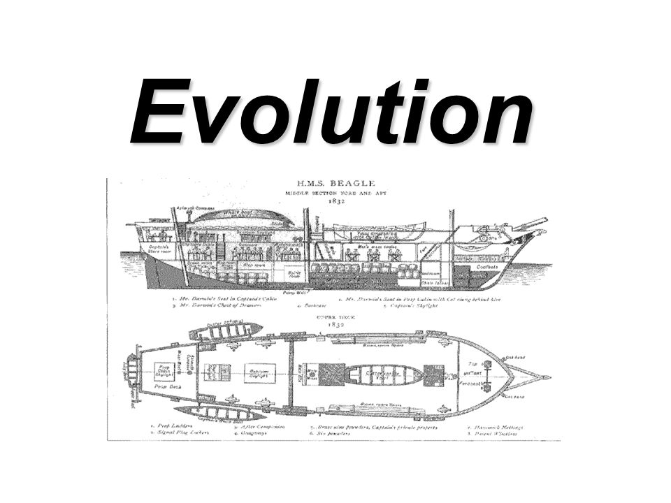 Evolution the underlying theme woven throughout the text, refers to the processes that have transformed life on earth from its earliest forms to the enormous diversity that characterizes it today