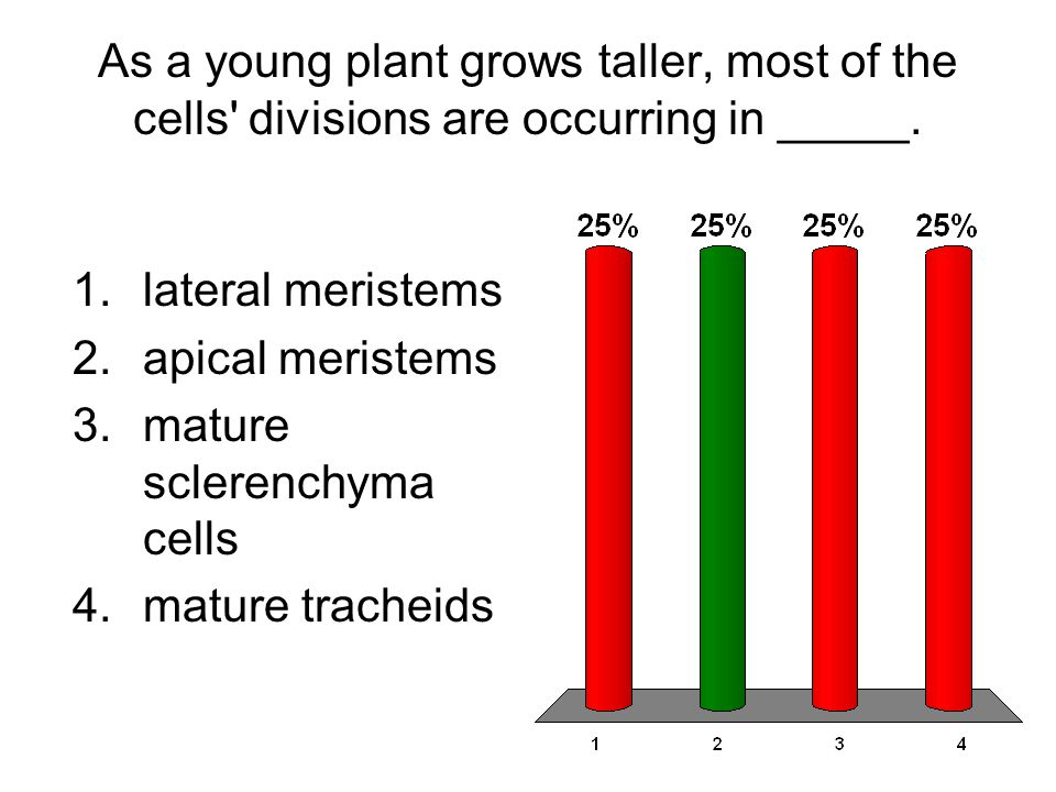 As a young plant grows taller, most of the cells divisions are occurring in _____.