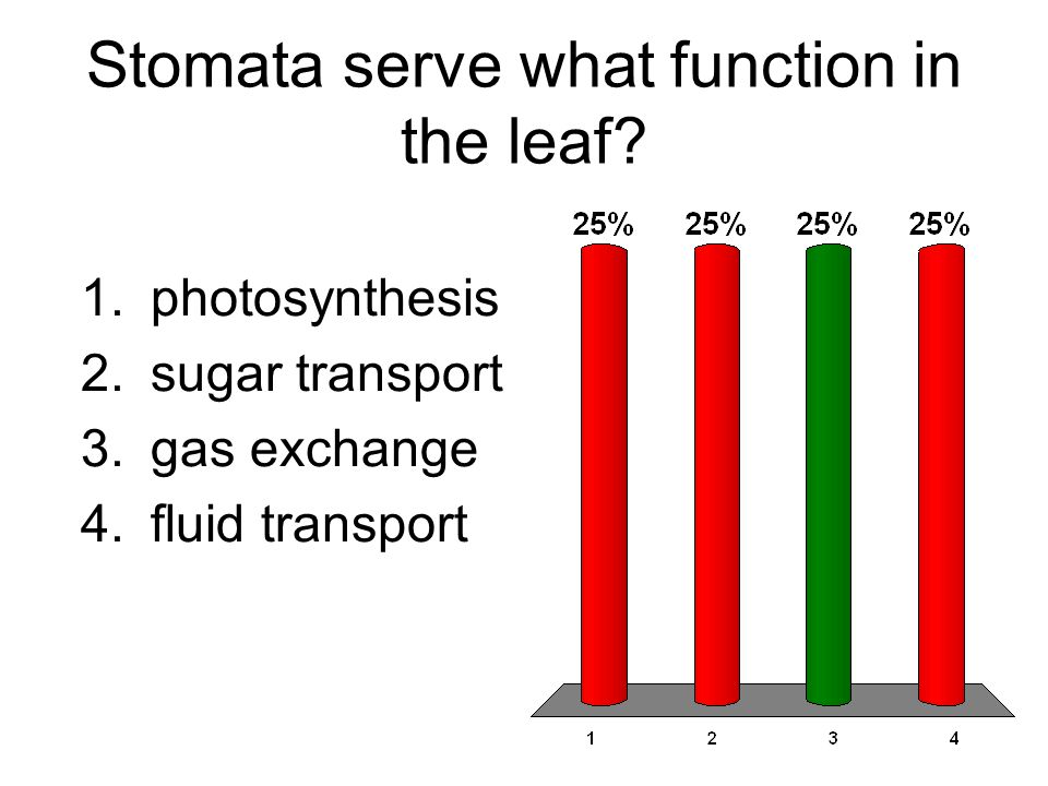 Stomata serve what function in the leaf.