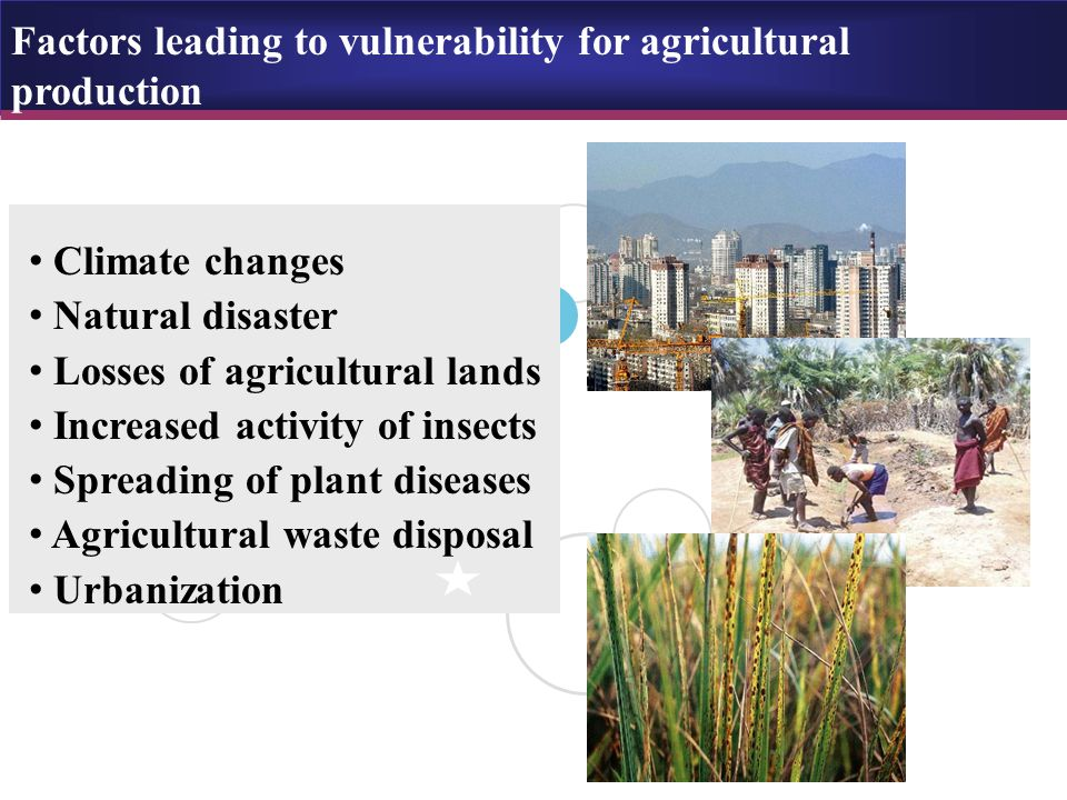 Rapid urbanization leading to vulnerability for agricultural production Rapid urbanization is identified by the conversion of agricultural lands to housing and other nonfarm uses By perception, this conversion will challenges our long-term capacity to provide food, fiber and ecosystem services to a growing world population.
