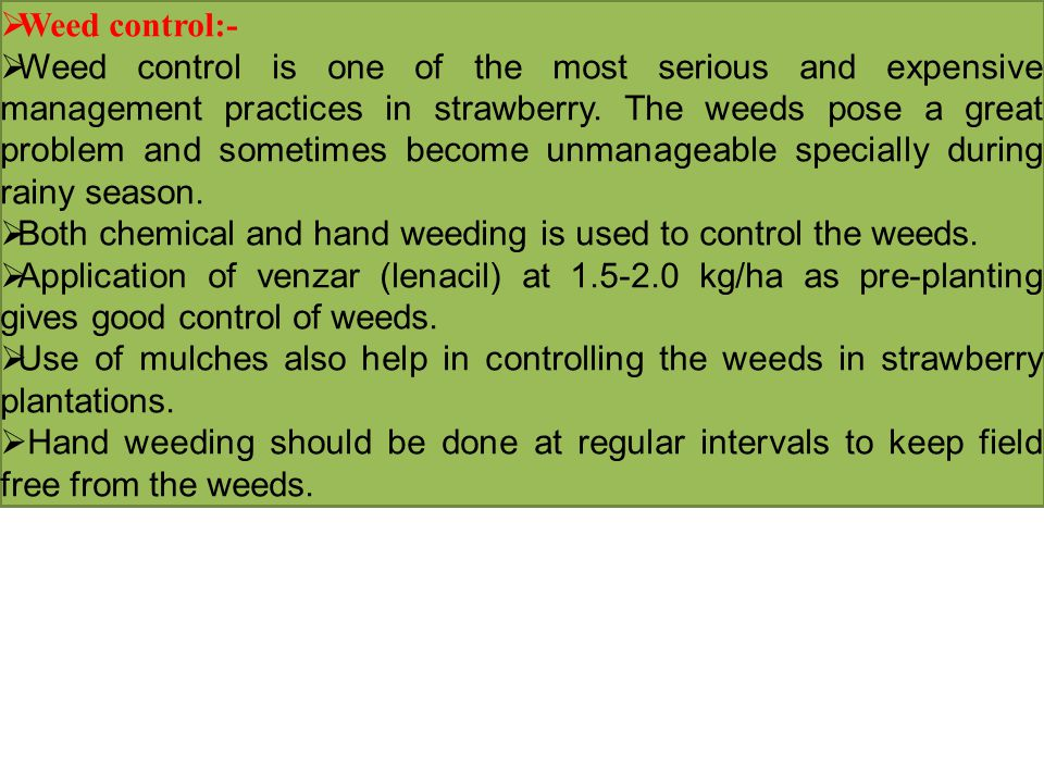  Weed control:-  Weed control is one of the most serious and expensive management practices in strawberry. The weeds pose a great problem and someti