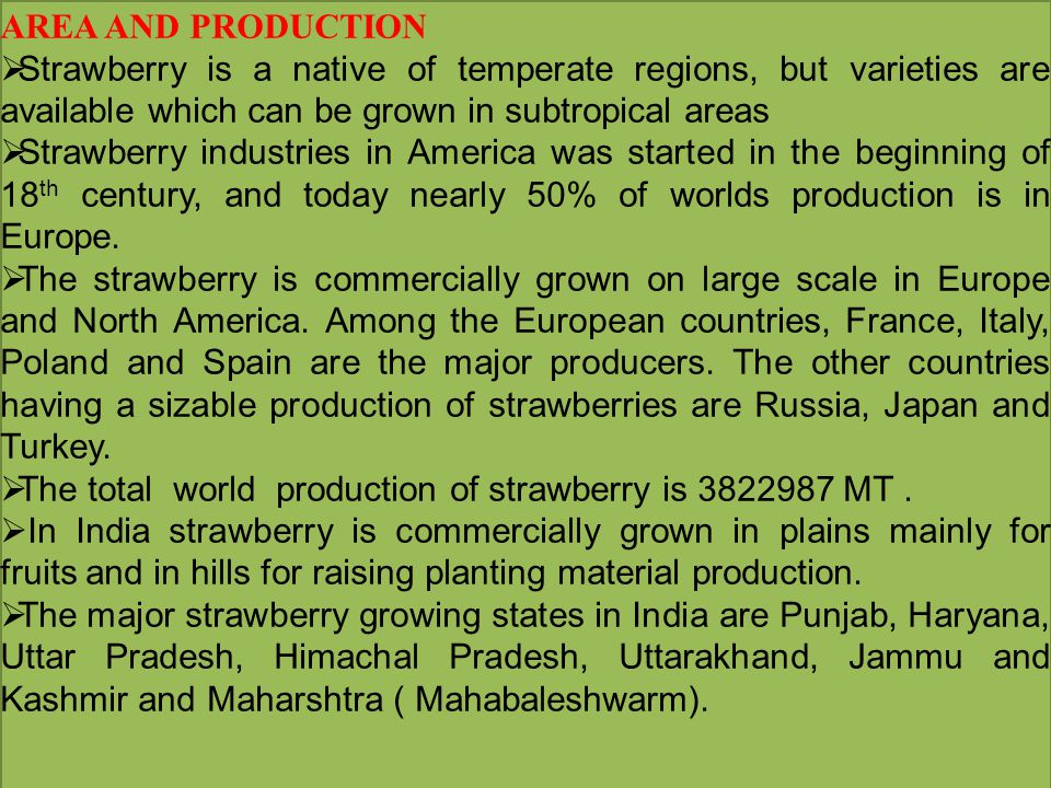 AREA AND PRODUCTION  Strawberry is a native of temperate regions, but varieties are available which can be grown in subtropical areas  Strawberry in
