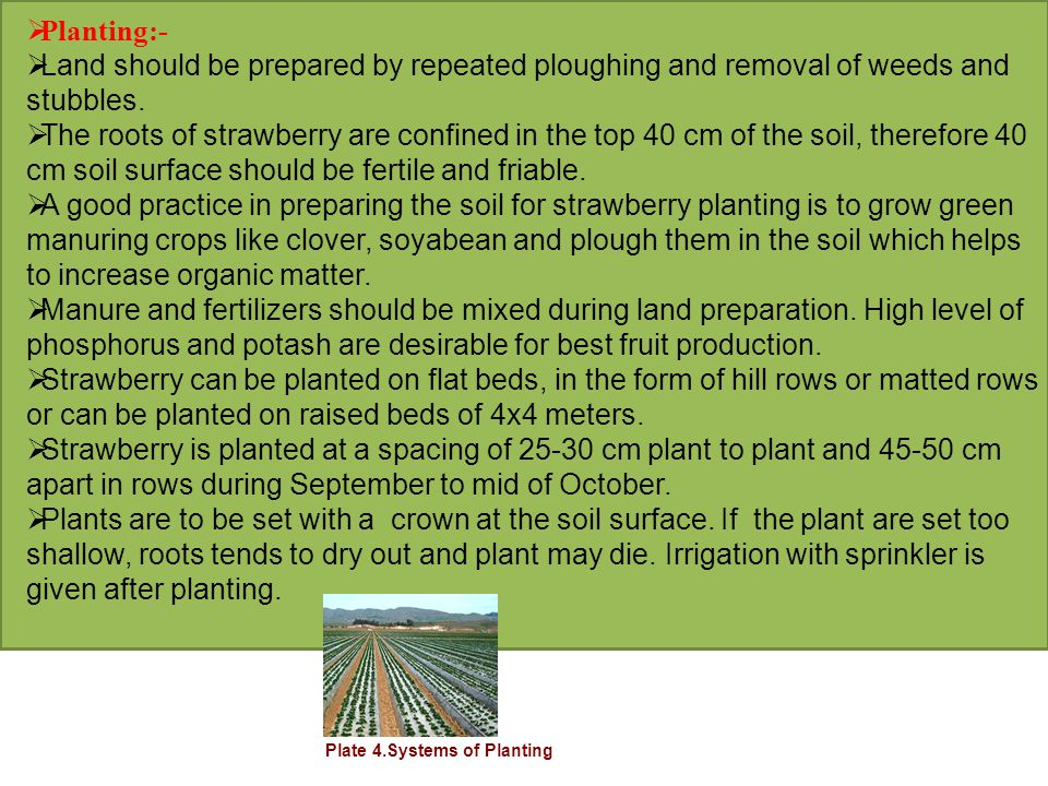  Planting:-  Land should be prepared by repeated ploughing and removal of weeds and stubbles.  The roots of strawberry are confined in the top 40 c