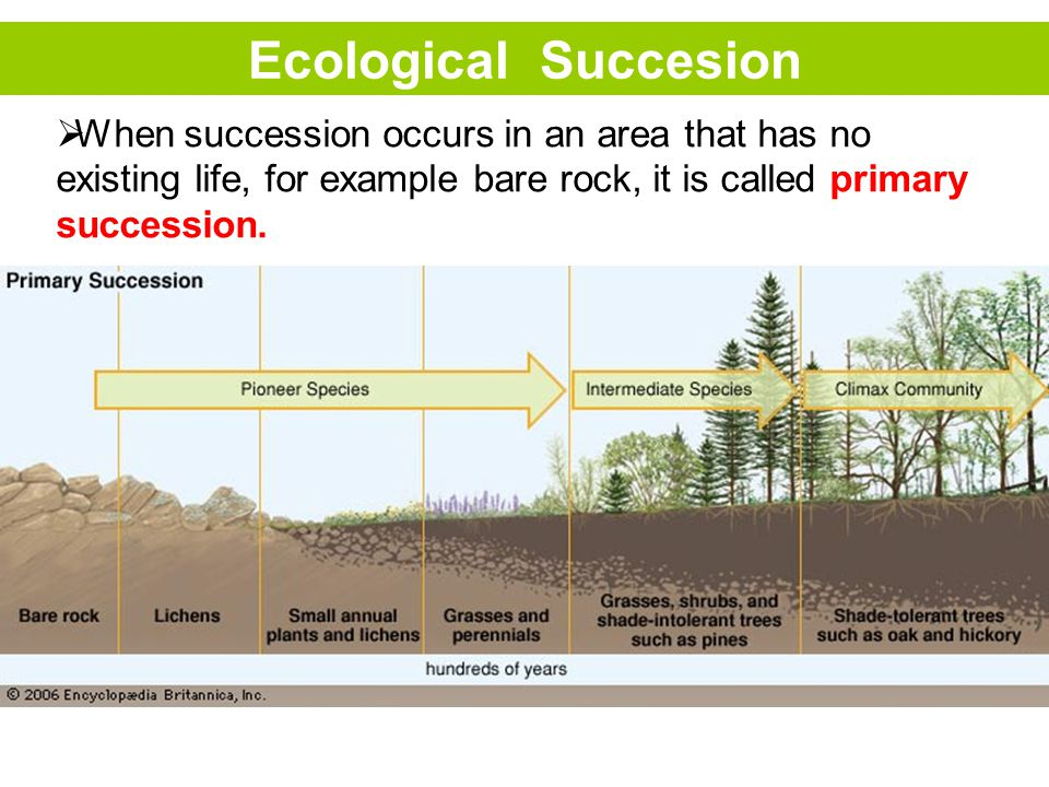 Ecological Succesion  When succession occurs in an area that has no existing life, for example bare rock, it is called primary succession.