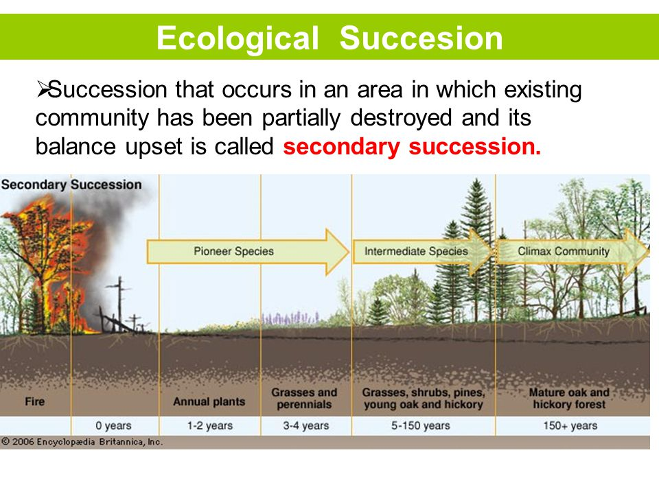 Ecological Succesion  Succession that occurs in an area in which existing community has been partially destroyed and its balance upset is called secondary succession.