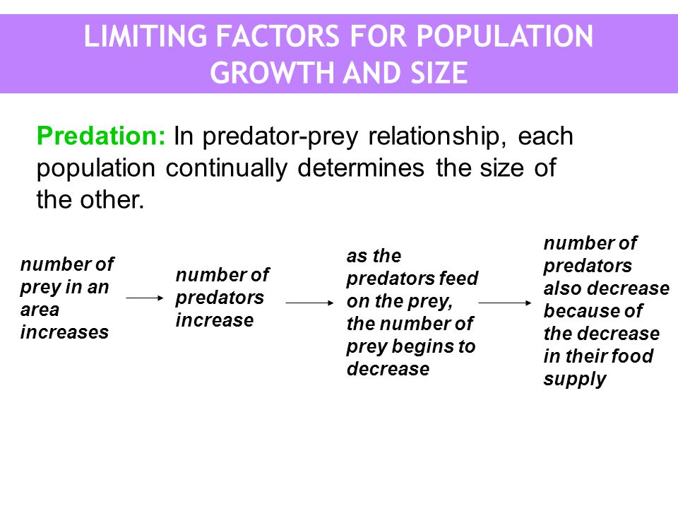 Predation: In predator-prey relationship, each population continually determines the size of the other. number of prey in an area increases number of