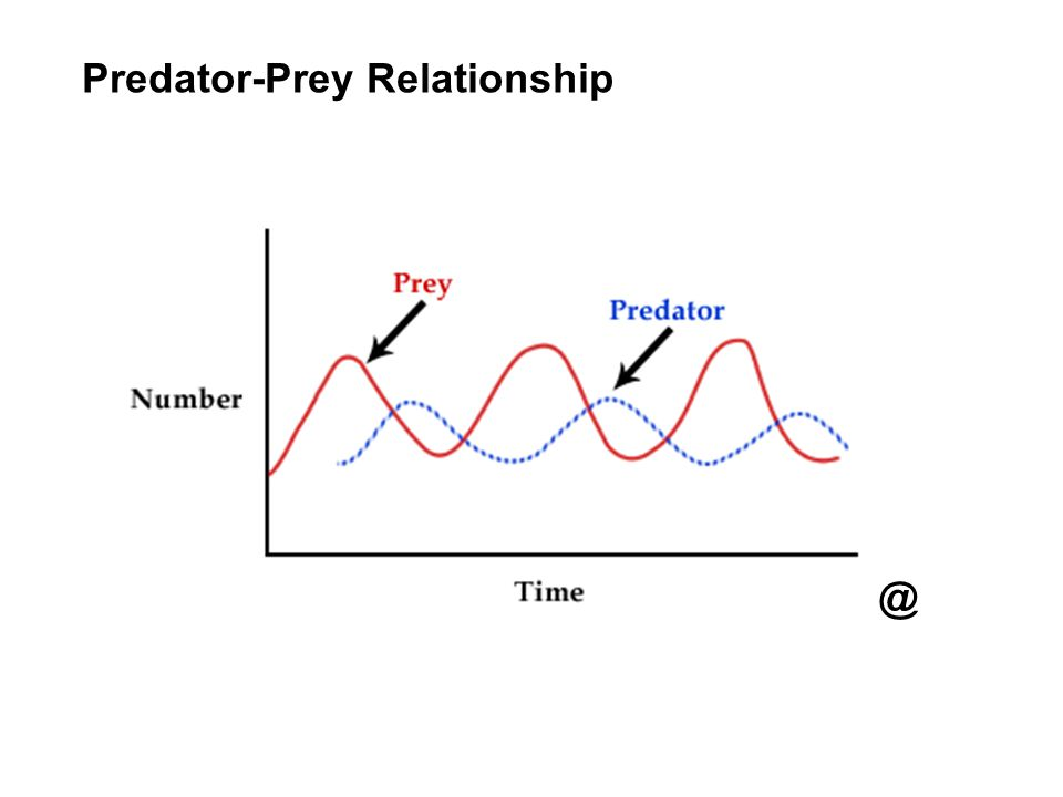 Predator-Prey Relationship @