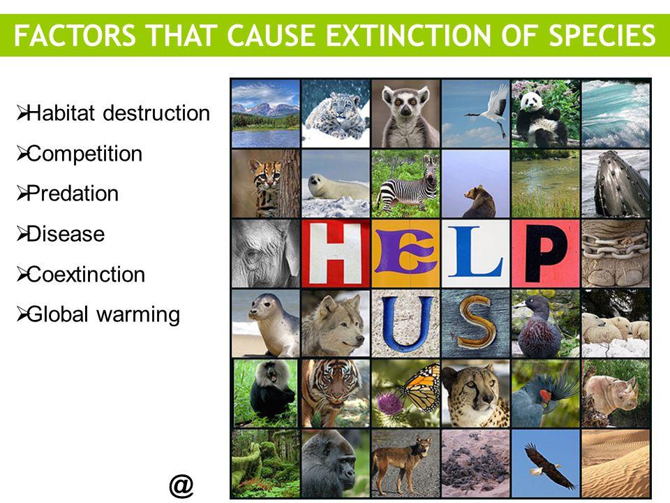  Habitat destruction  Competition  Predation  Disease  Coextinction  Global warming @ FACTORS THAT CAUSE EXTINCTION OF SPECIES