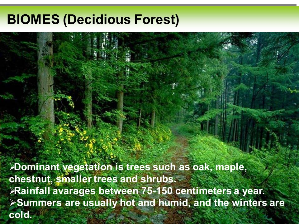 BIOMES (Decidious Forest)  Dominant vegetation is trees such as oak, maple, chestnut, smaller trees and shrubs.