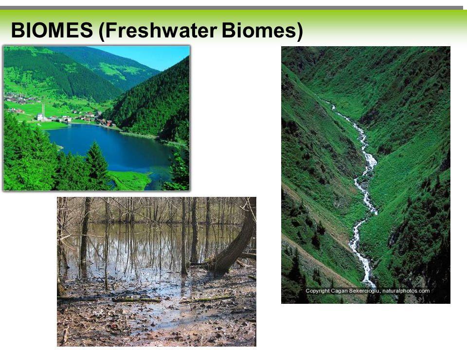 BIOMES (Freshwater Biomes)
