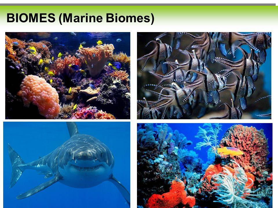 BIOMES (Marine Biomes)