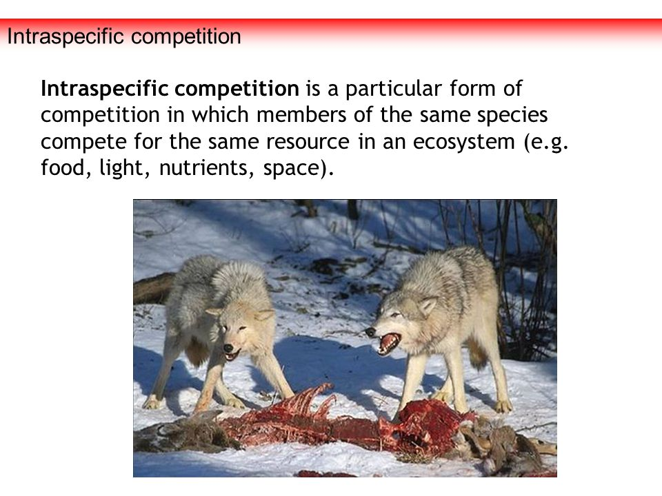 Intraspecific competition Intraspecific competition is a particular form of competition in which members of the same species compete for the same reso